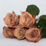 Coffee Colored Roses