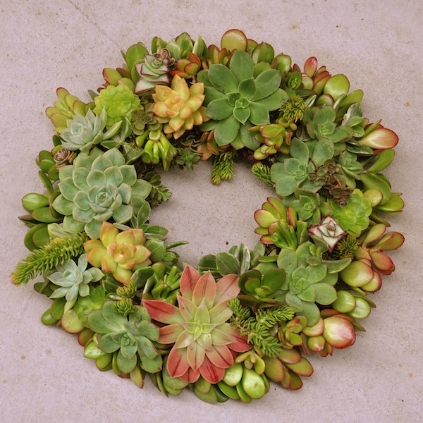 Living Succulent wreath by Flower Duet