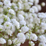 baby's breath weddings