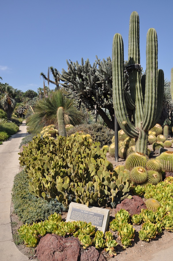 Huntington Library Cactus Garden
