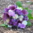 http://flowerduet.com/wordpress/wp-content/uploads/2014/05/purple-bouquet-flowerduet-47x47.jpg