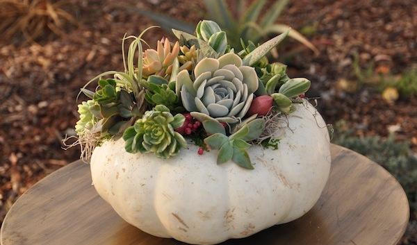 https://flowerduet.com/wordpress/wp-content/uploads/2014/09/flowerduet.com-white-succulent-pumpkin-fall-20141-600x353.jpg