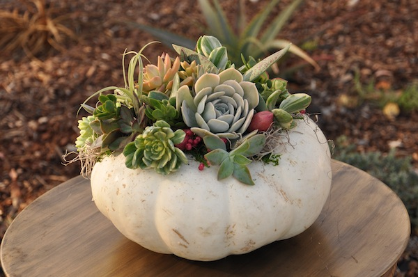 Flower Duet's Succulent Pumpkins for 2014