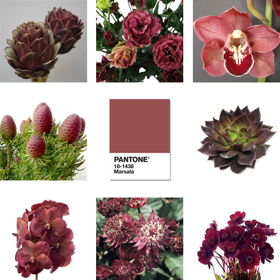 Marsala Flowers for 2015.