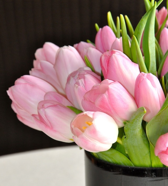 Pink tulips for Christmas
