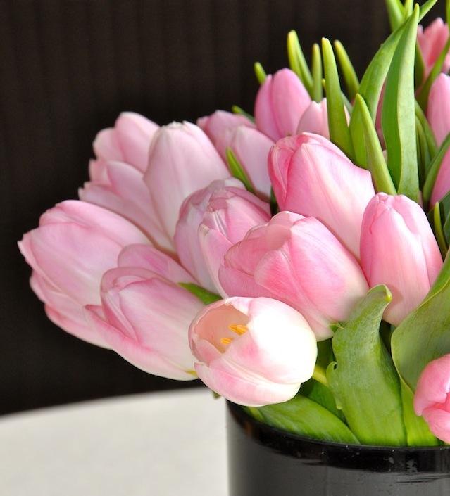 Pink tulips for Christmas