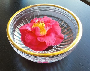 Red Camellia blooms