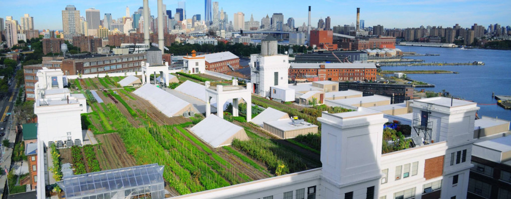 The Brooklyn Grange Farm is the site of the next American Grown Field to Vase dinners and the world's largest commercial rooftop soil farm right here in NYC, proving once and for all that rooftop agriculture works. Photo: BrooklynGrange.com.