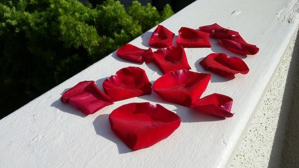 Red Rose Petals.
