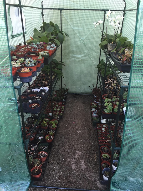 Final greenhouse set up with plants!