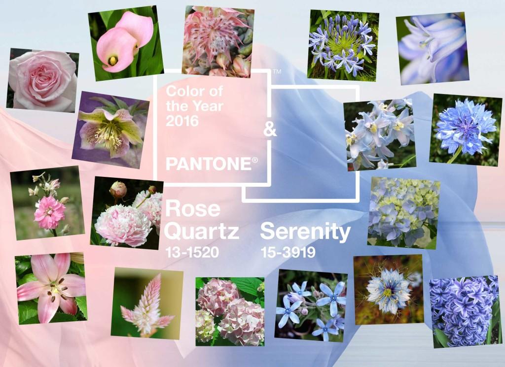 pantone 2016 color wedding planning panel orchid flower workshops. Black Bedroom Furniture Sets. Home Design Ideas