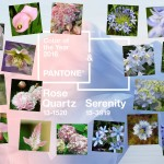 Flower Duet's Curated Flowers for Pantone's Dual Color choice for 2016