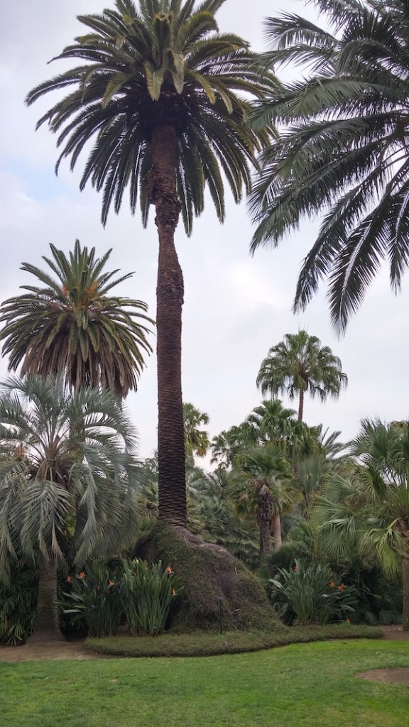 huntington-palm-garden