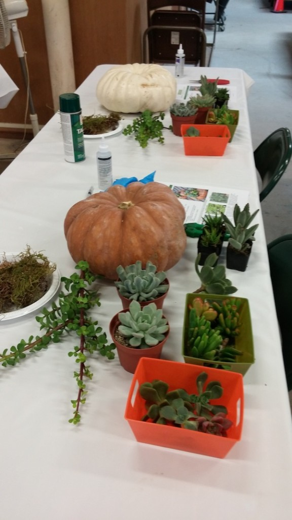huntington-succulent-pumpkins