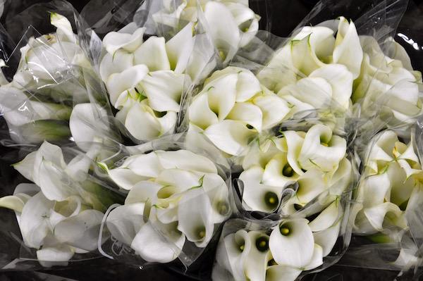 Mini White Calla Lilies
