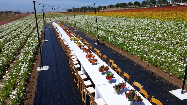 Field to Vase Dinner Carlsbad Flowers