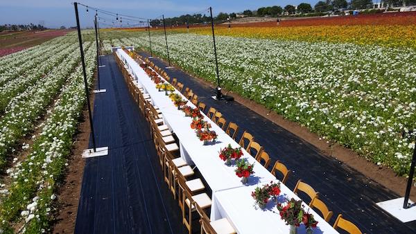 Field to Vase Dinner Carlsbad Flowers