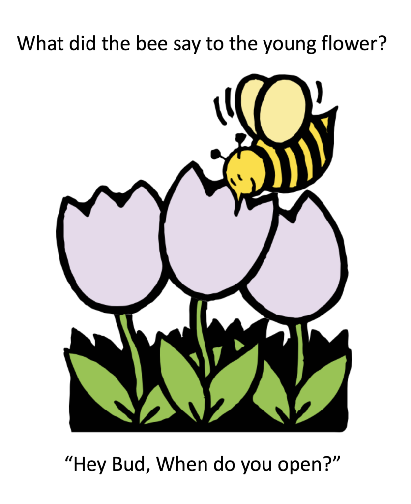What did the bee say to the flower?