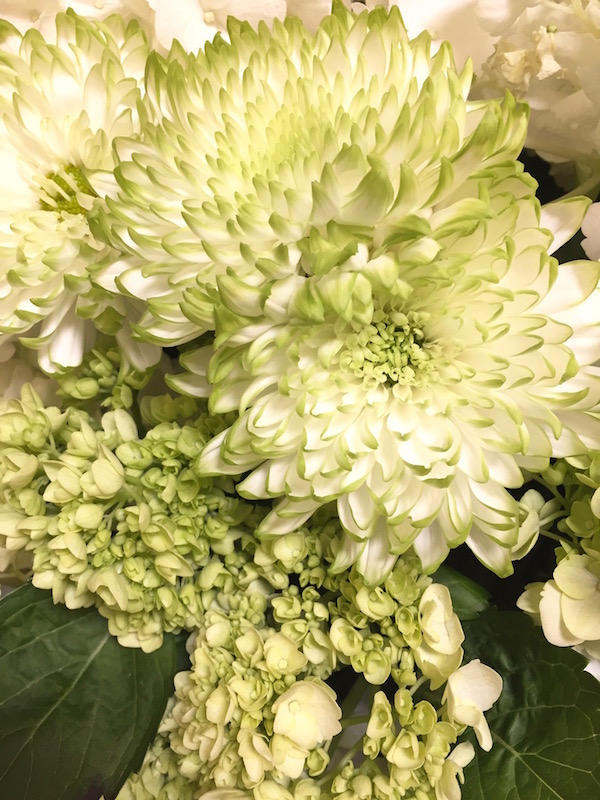 Green Mums and Green Hydrangea