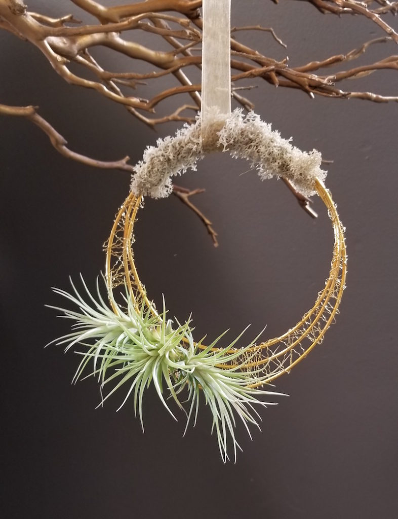 Living Tillandsia Wreath