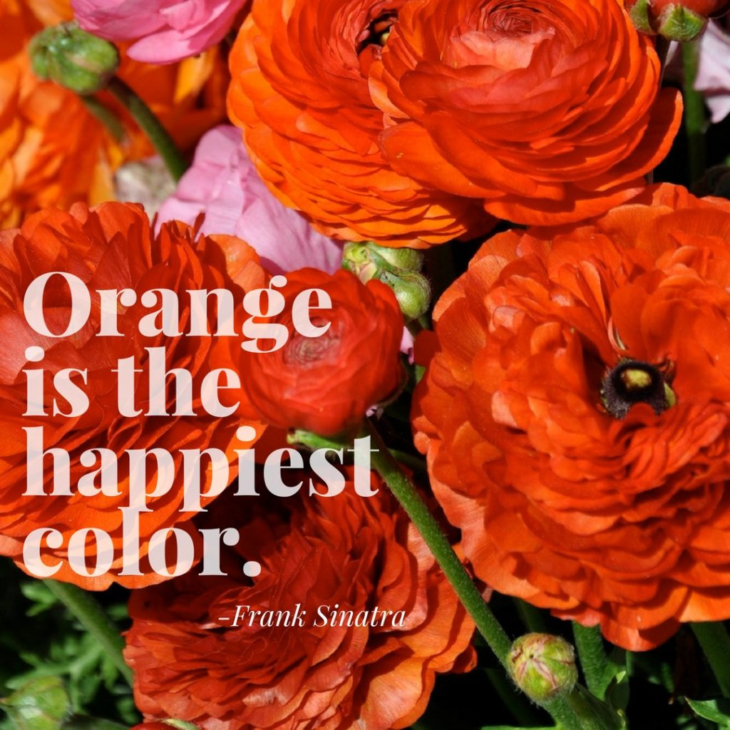 Orange is the Happiest Color Quote by Frank Sinatra