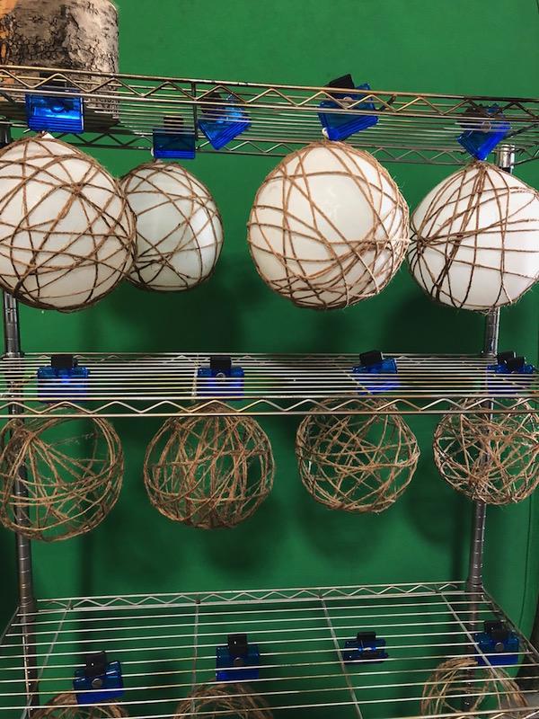 Kokedama Balls