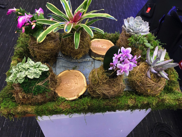 Kokedama on a tray