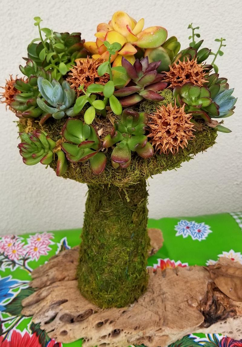 Succulent Mushroom