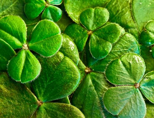 St. Patrick's Day Flower Ideas
