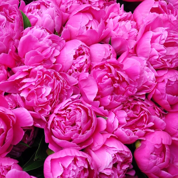 Flower Market Peonies