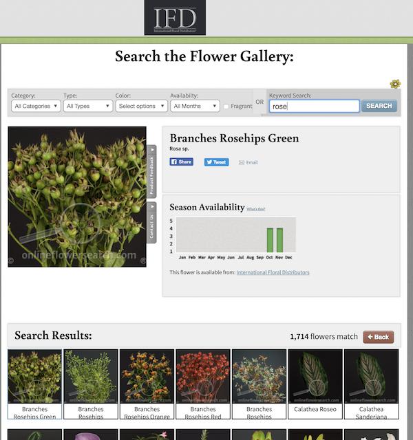 IFD Online Flower Gallery