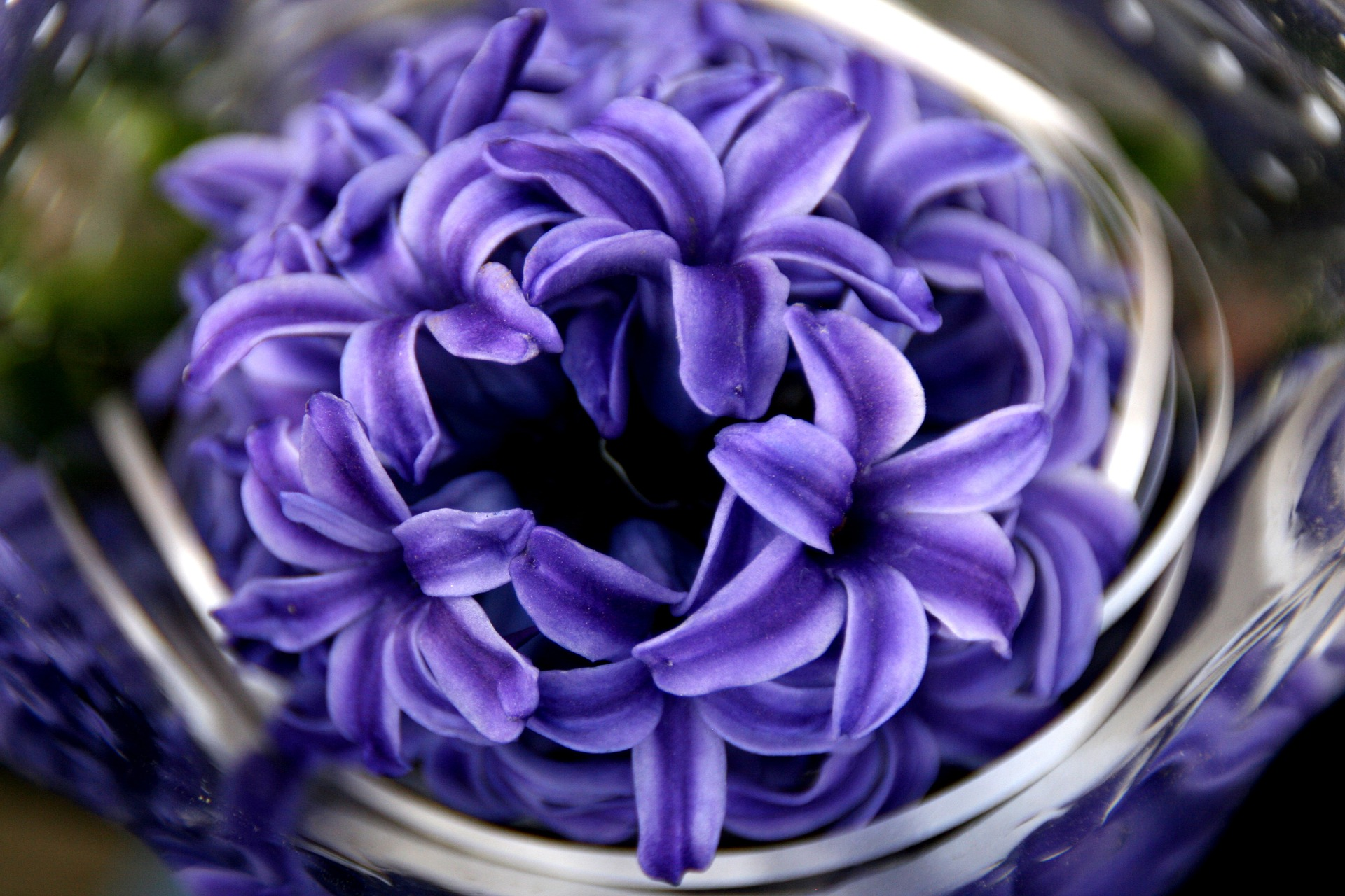 Hyacinth Flower Classes