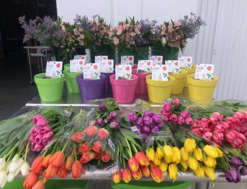 Private Group Flower Lessons Dominate April and May for Flower Duet