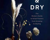 Cut & Dry Book Cover