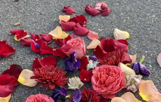 Asphalt and flowers